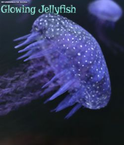 3D Underwater Fauna: Flowing Jellyfish