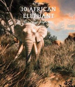 10 African Elephant Backgrounds