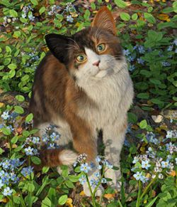 CWRW Calicos for the HW House Cat