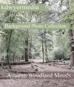 Autumn Woodlands Moods