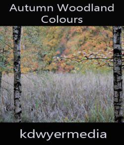 Autumn Woodland Colours