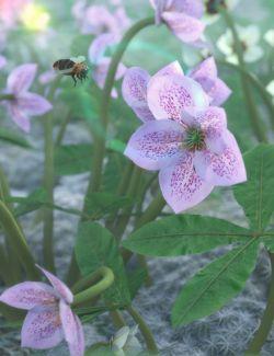 Garden Plants- Helleborus orientalis Christmas Rose Flowers
