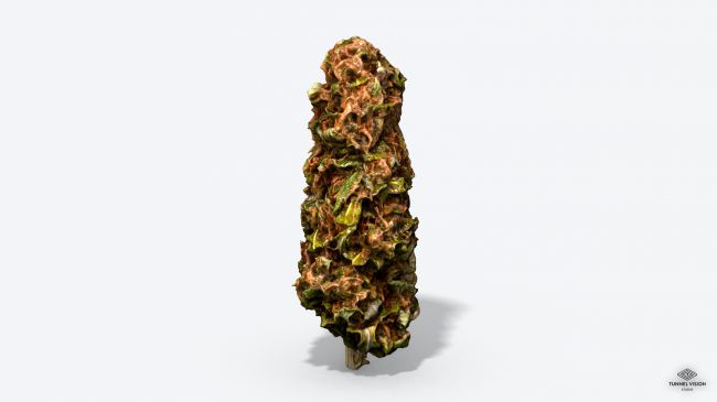 Marijuana Bud - Photoscanned PBR  Extended License