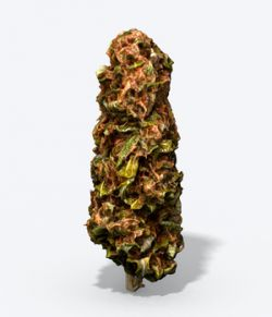 Marijuana Bud - Photoscanned PBR  Extended License