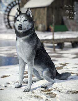 Husky for Daz Dog 8