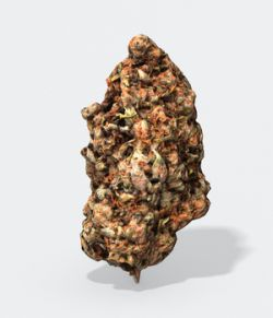 Marijuana Bud 2- Photoscanned PBR- Extended License