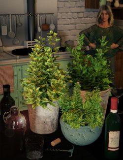 Garden Plants- Herbs Vol 2