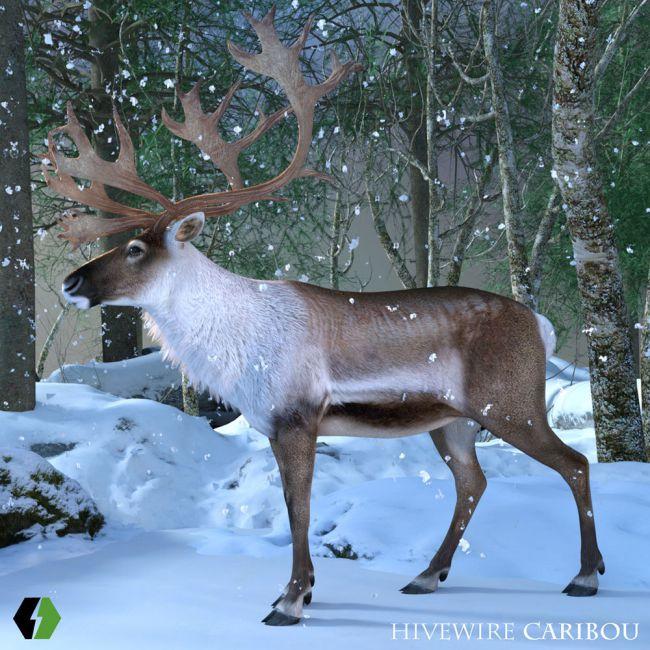 HiveWire Caribou