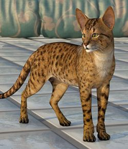 CWRW Exotics 1 for the HW House Cat