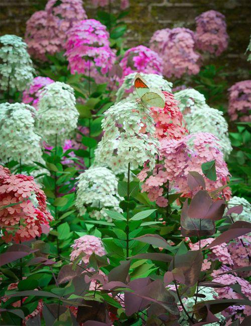 Garden Plants - Summer Border Collection
