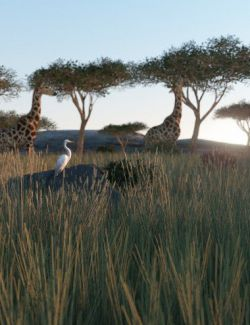 Expedition African Environment
