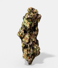 Marijuana Bud 3- Photoscanned PBR- Extended License