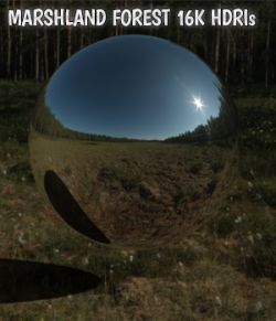 Marshland Forest 16K HDRIs