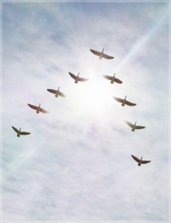 iREAL Animated Flocks of Birds