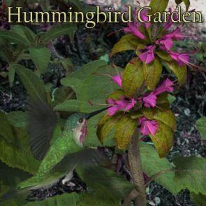 Nature's Wonders Hummingbird Garden