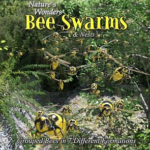 Nature's Wonders Bee Swarms & Nests