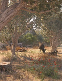 Olive Grove - Ancient Olive Trees