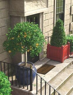 Predatron Ornamental Trees and Bushes