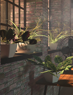 Tropical Plants Vol 4 - House Plants