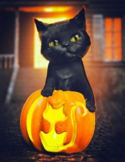 Moshi The Kitten