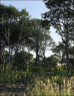 Australia Botanica - Trees and Shrubs