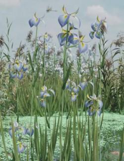 Water Iris- High Res Flowering Plants
