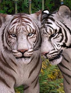 CWRW White Tigers