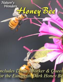 Nature's Wonders Bee