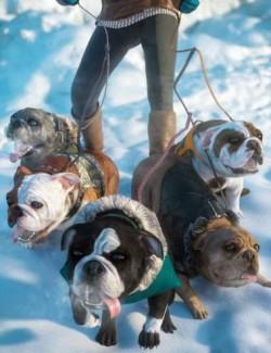 Baxter's Puppy Love Bundle