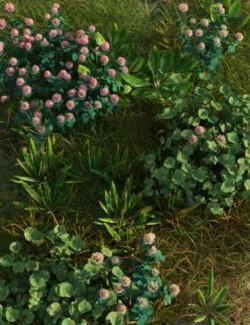 The (Im)Perfect Lawn II- Essential Grassland Weeds