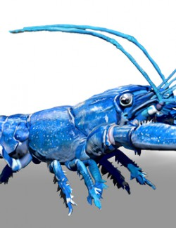Blue Crawfish ZBrush ZTL Sculpt and Polypaint