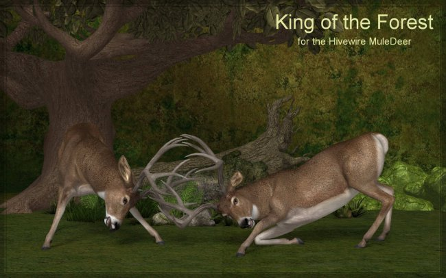 King of the Forest for the HiveWire Mule Deer Buck