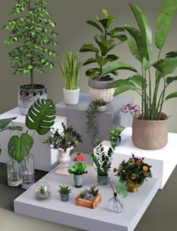 Collection of Pot Plants