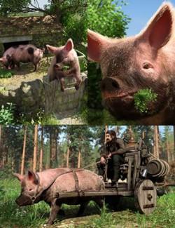LoREZ Pig 2 Bundle