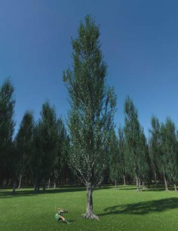PTU Poplar Trees Ultimate