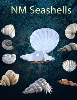 NM Seashells