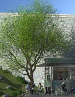 Summer Or Fall Season Linden Trees