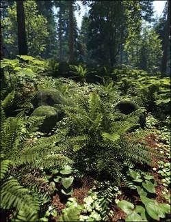 Pacific Northwest Botanica- Understorey