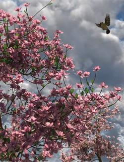 Magnificent Magnolia Trees