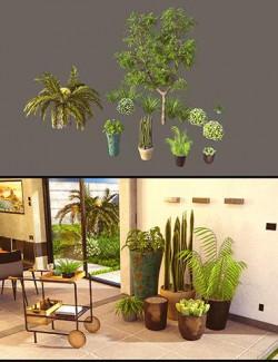 Cecilia House Plants