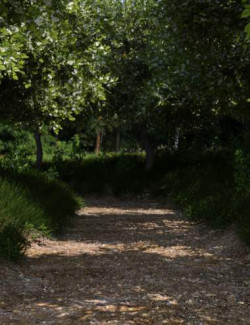 Path Between the Trees