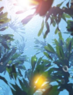 Vue  Seaweed Bundle