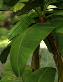 Photo Props: Banana Tree Collection