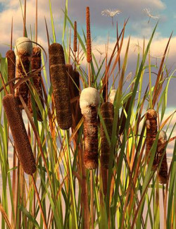 Rigged Cattail Reeds
