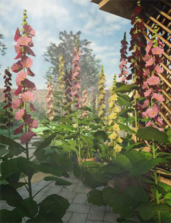 Cottage Garden Flowers- Hollyhocks