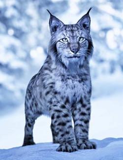 Felidae by AM - Lynx