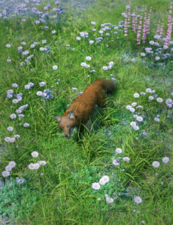 Meadow Flowers - Field Scabious
