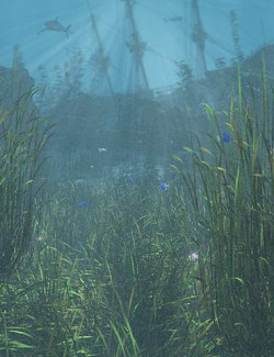 Just Beachy - Seagrass Underwater Meadows