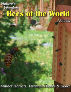 Nature's Wonders Bees of the World Vol. 2